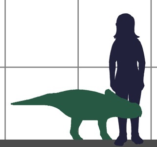 Approximate size of Protoceratops